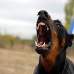 vocalizzazioni del cane