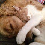 amicizia tra cani e gatti