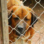meno tasse per chi adotta un cane