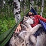Loki the Wolfdog