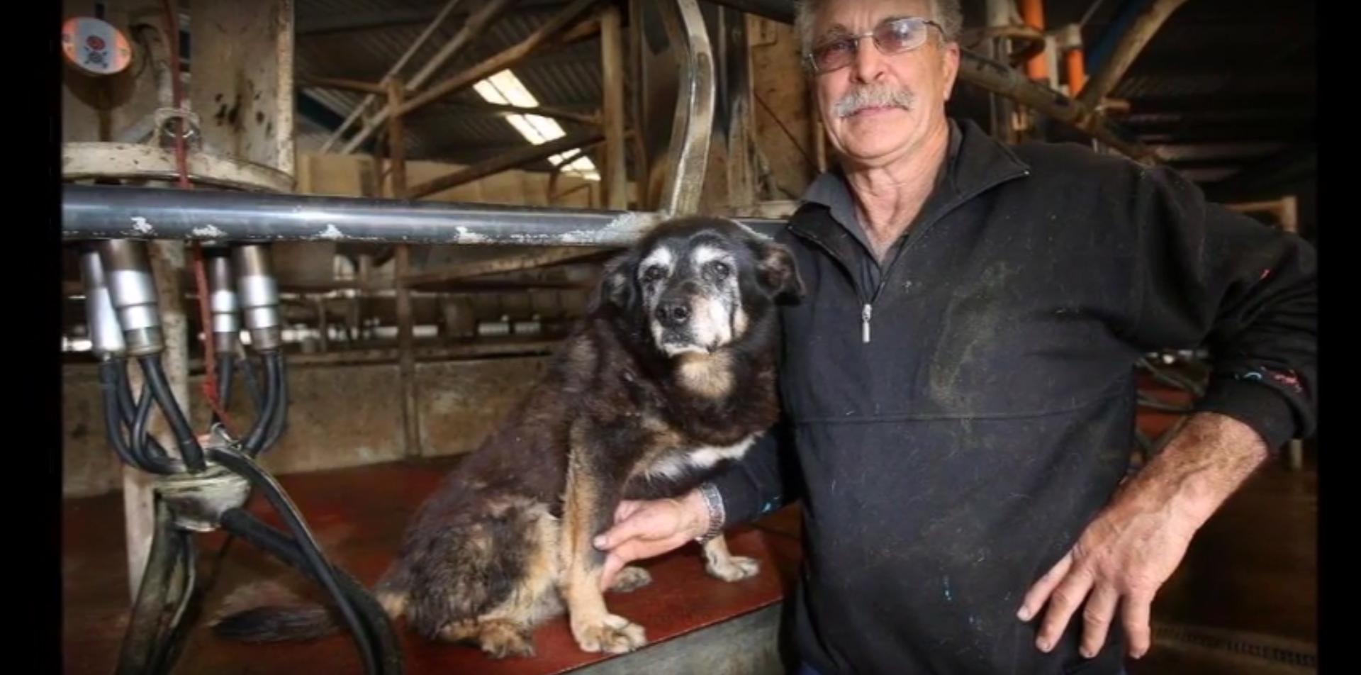 Il cane più vecchio del mondo è morto a 30 anni