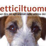 cani in vetrina