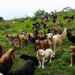terra dei cani randagi