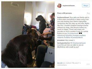 aereo invaso dai cani