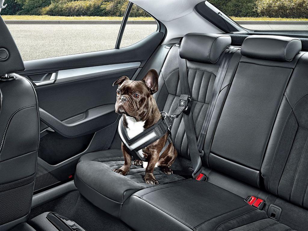 cintura di sicurezza per cani