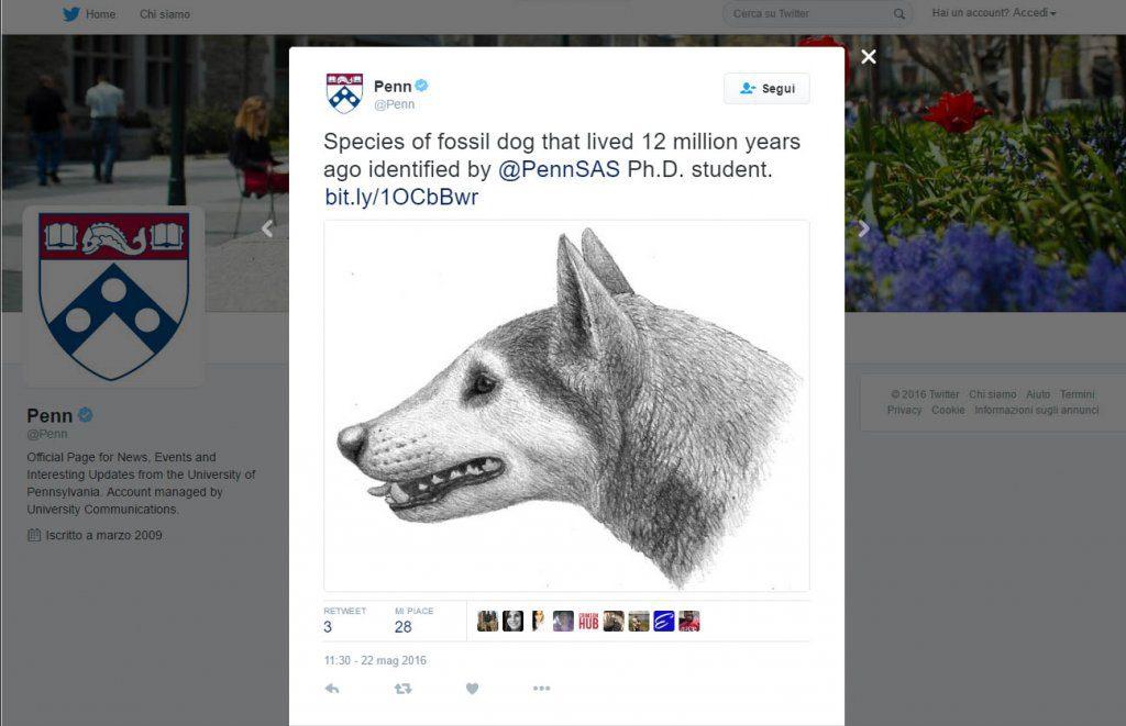 nuova specie canina