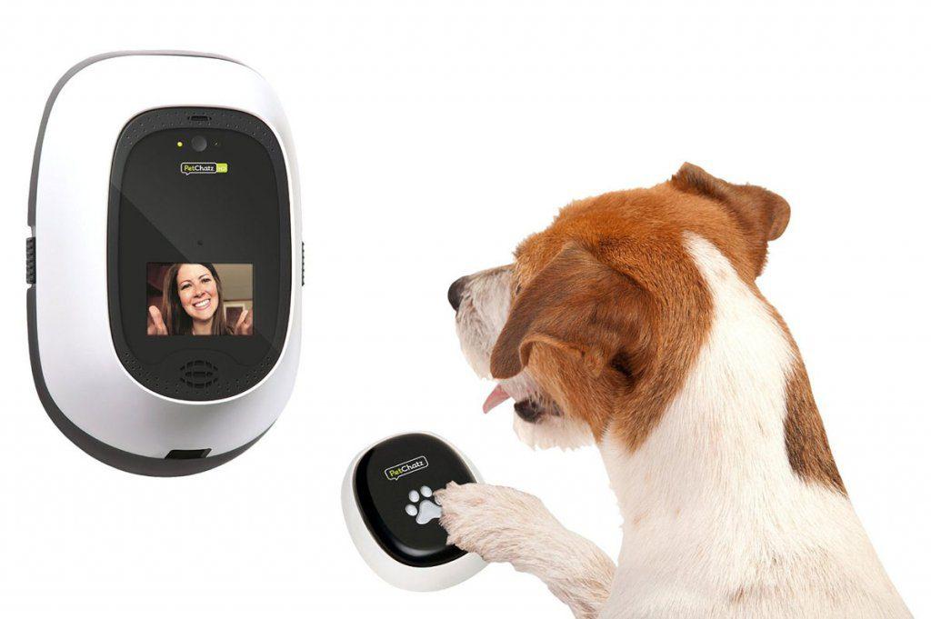 in contatto con il nostro cane