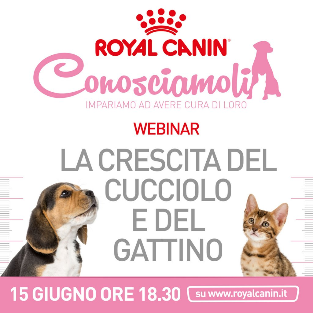webinar Royal Canin