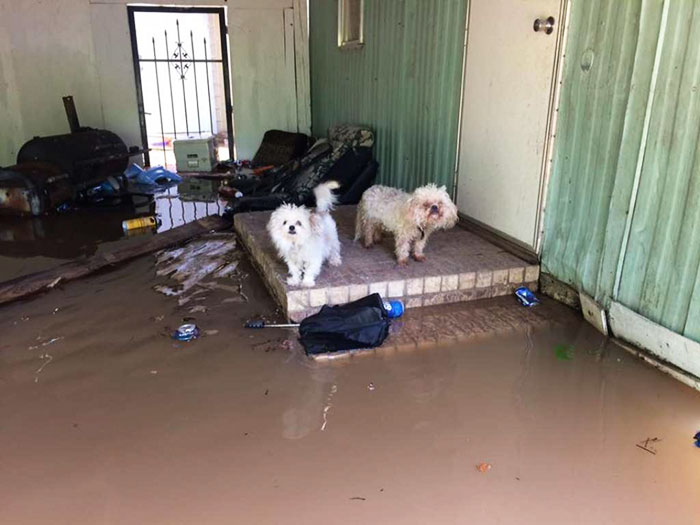 salvati 40 cani