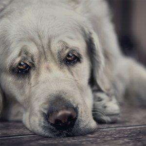 parassiti interni dei cani