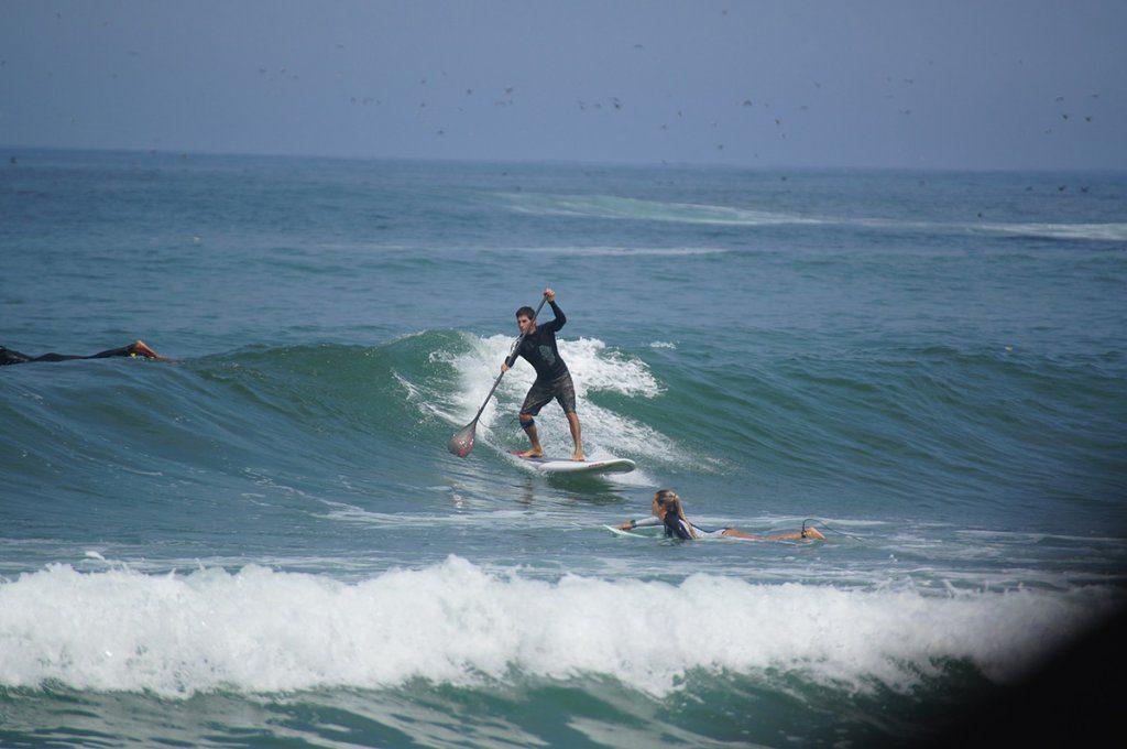cani sul surf