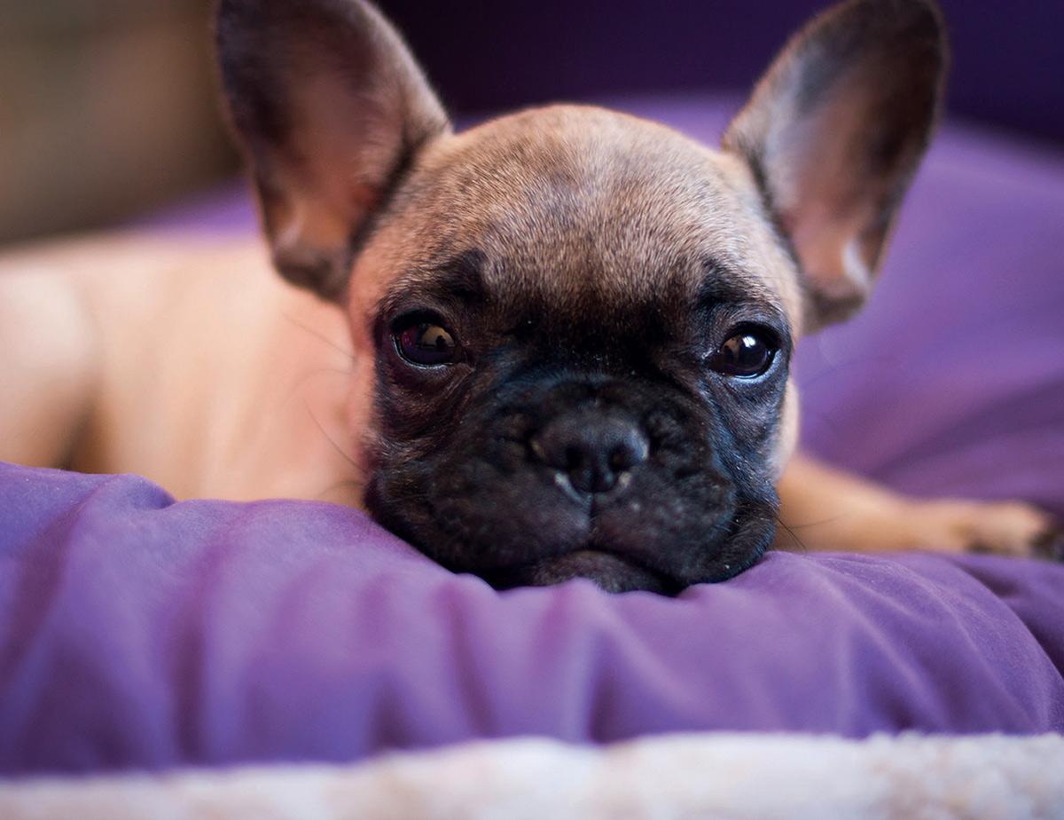 Adottare un cane: indecisione fra taglia piccola media o grande
