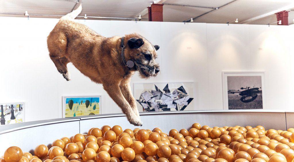 mostra per cani