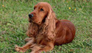 Cani in campagna 03
