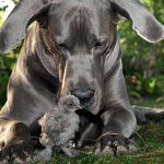 Cani in campagna