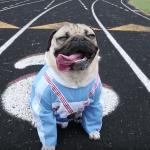 cane che ha vinto le Olimpiadi
