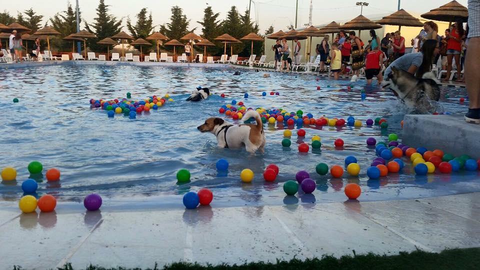 piscina per cani