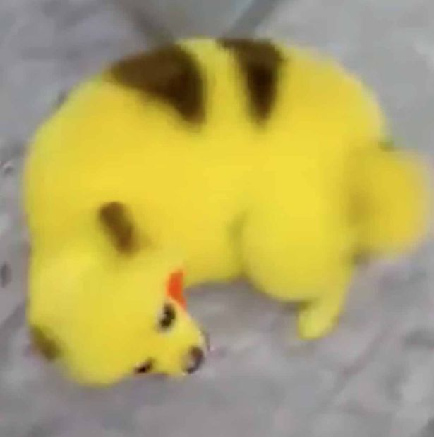 cane pokemon