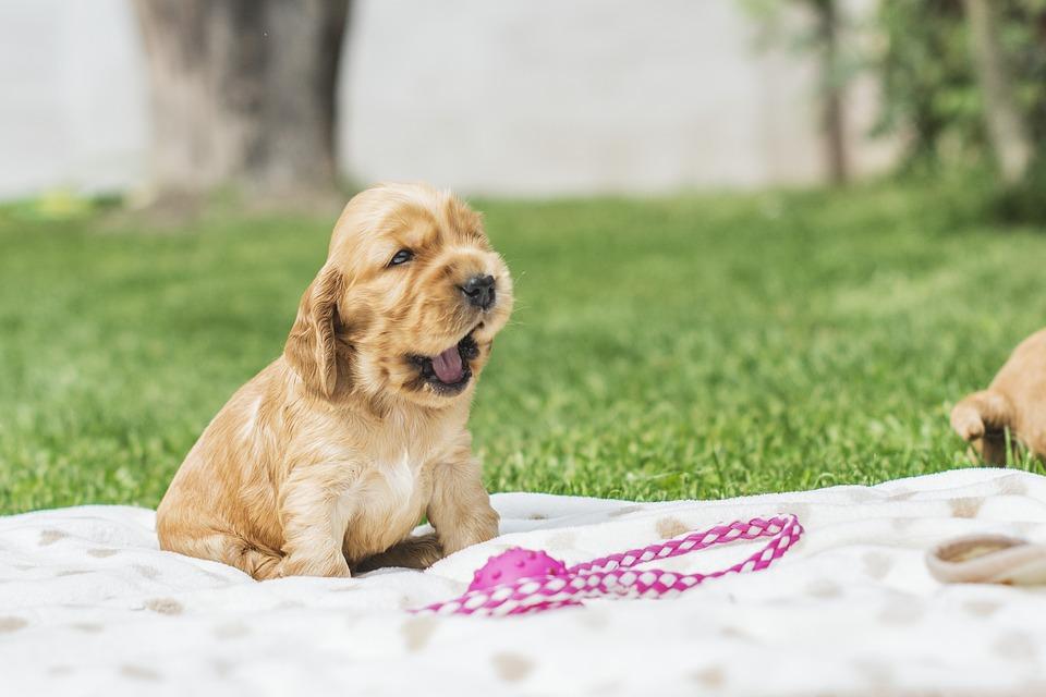 Vita da cani: attenzione ai veleni domestici