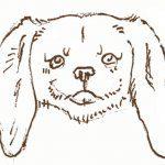 Come vedono i cani