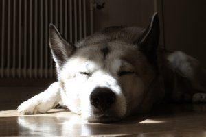dog-1412126_1280