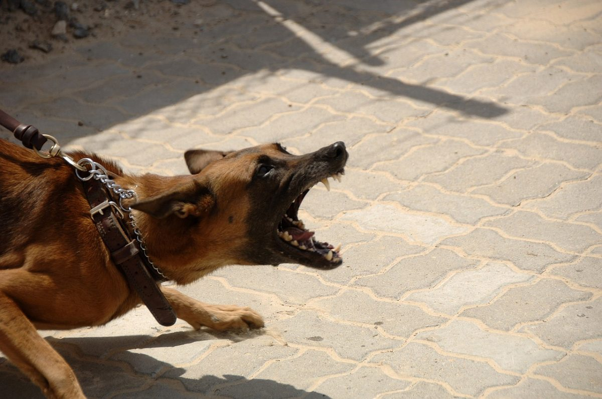 aggressioni di cani
