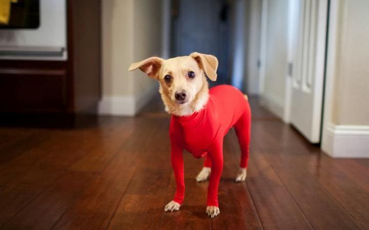 body per cani