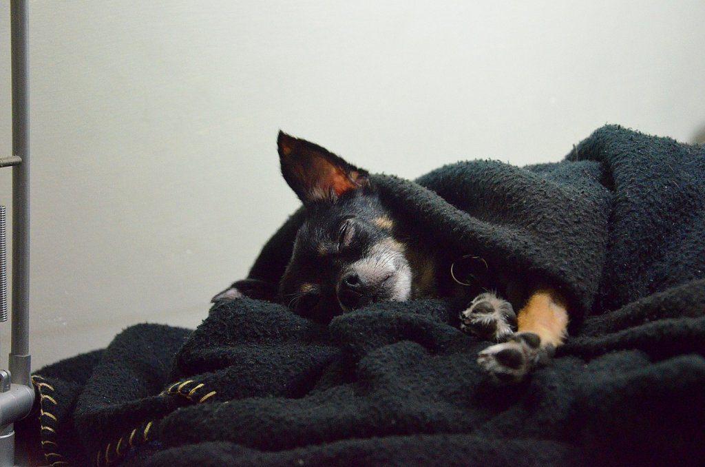 sognano i cani