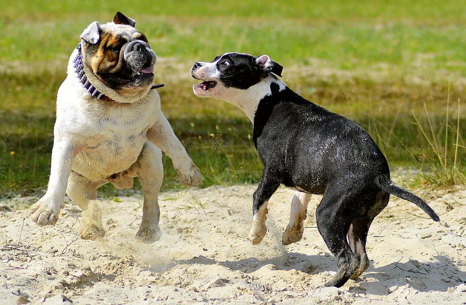 Gestire l'incontro tra due cani: ecco come fare