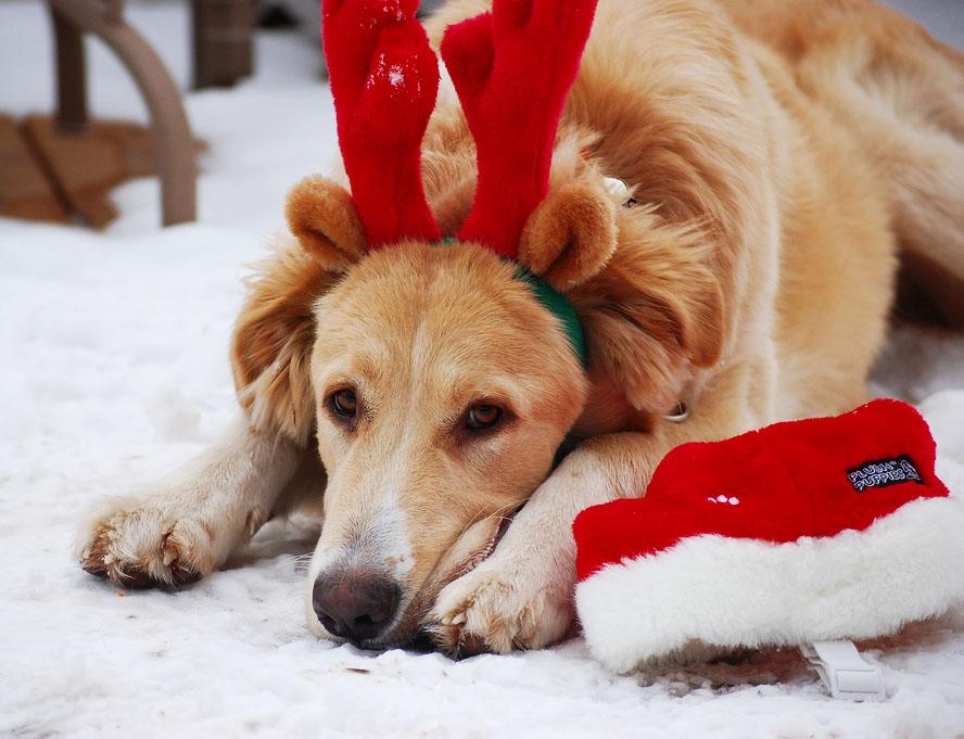 Cane: attenzione ai pericoli natalizi
