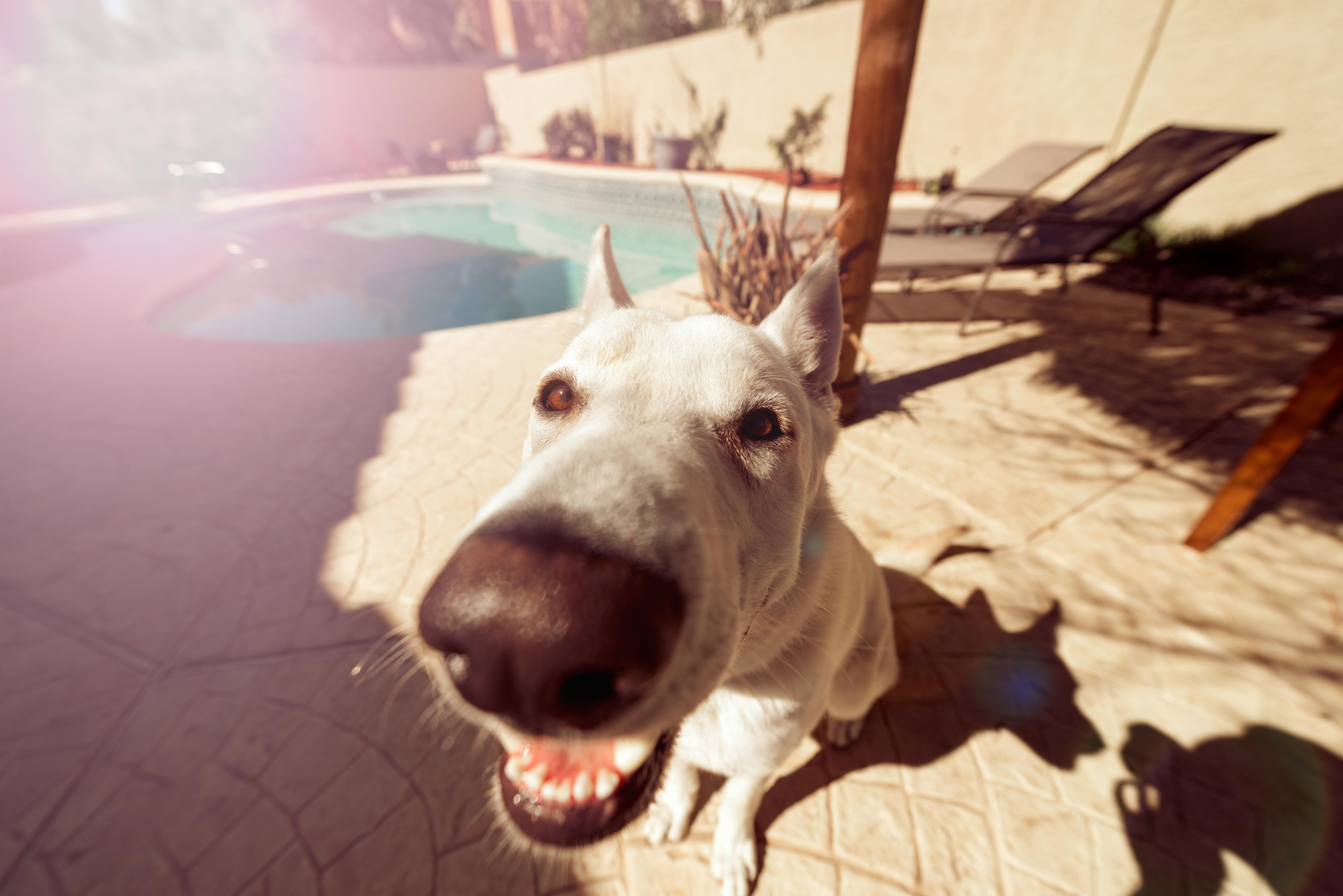 Cinque comportamenti insoliti del tuo cane