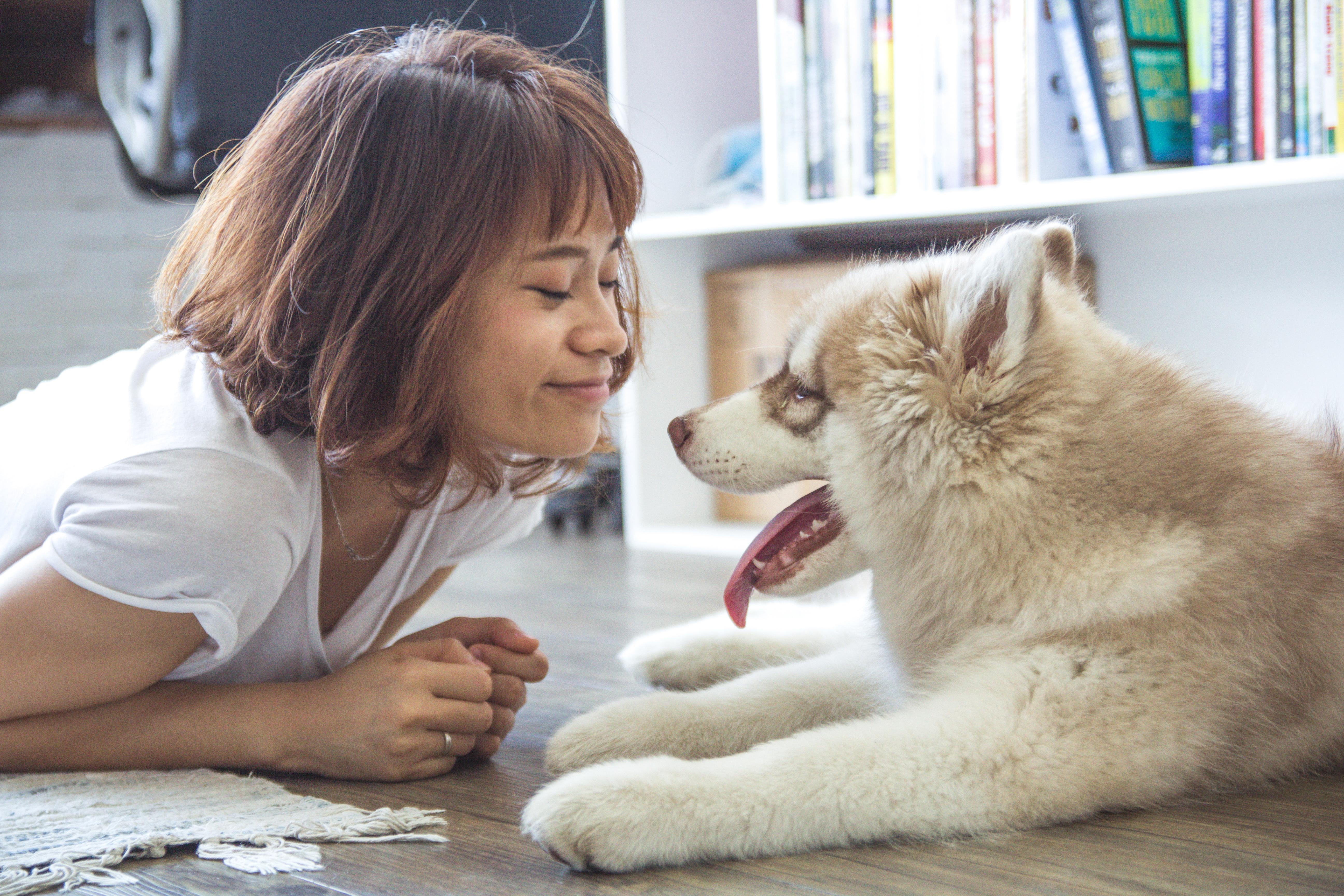 Lodi o Snack: cosa preferiscono i cani?