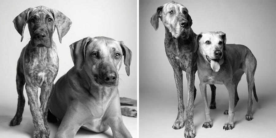 cani vecchi coppia