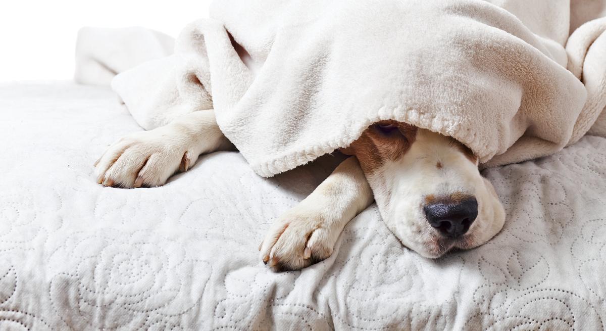 In che posizione dorme il tuo cane?