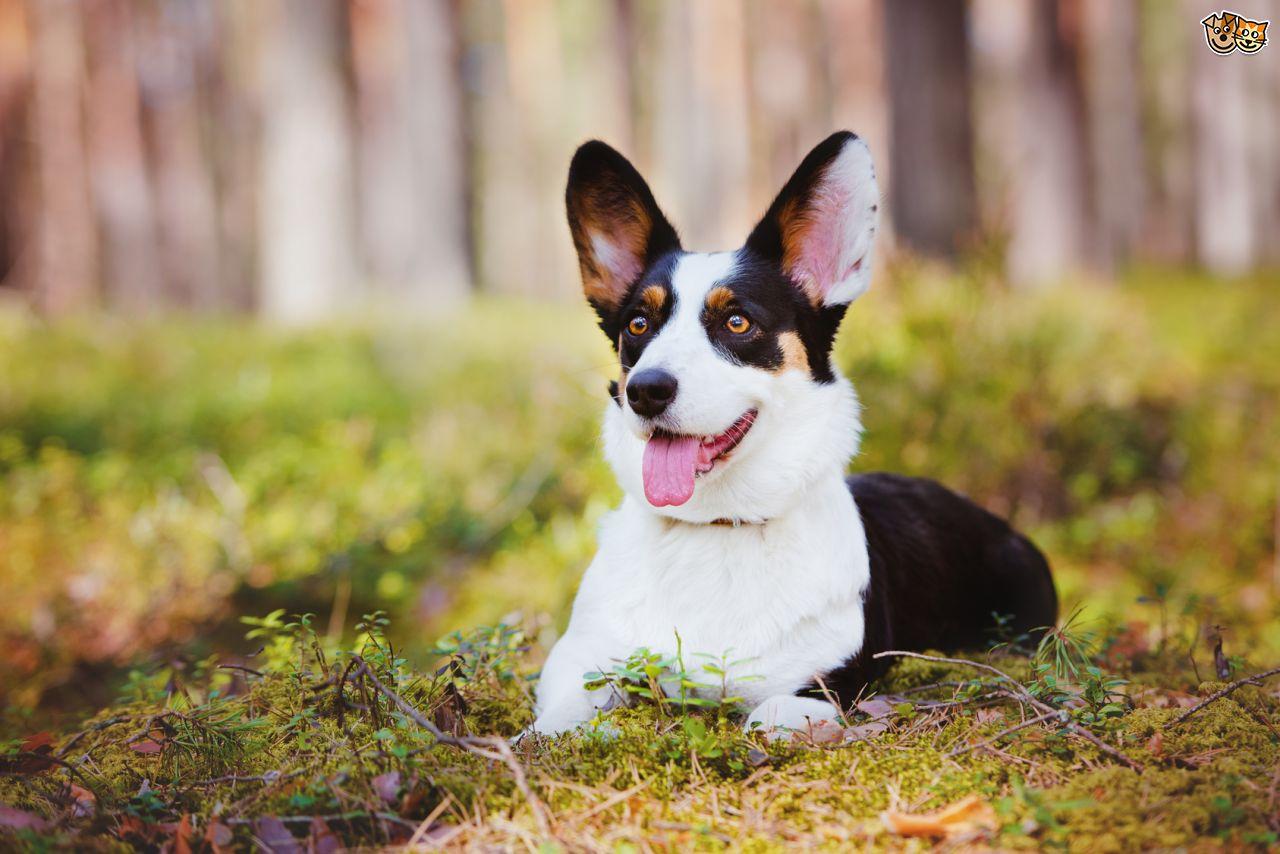 Il kit di accoglienza per un cane