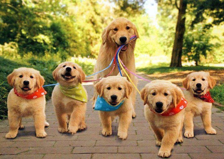 Risultati immagini per cane passeggiata
