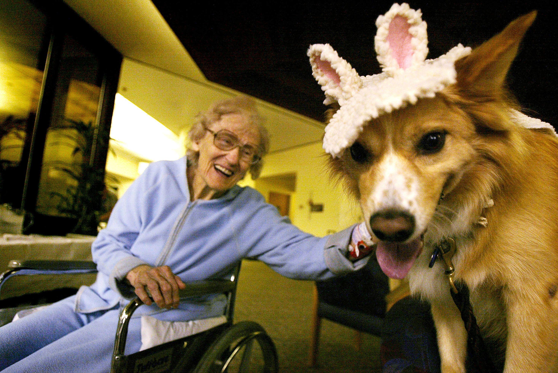 5 incredibili modi con cui un cane può cambiare la vita ad una persona anziana