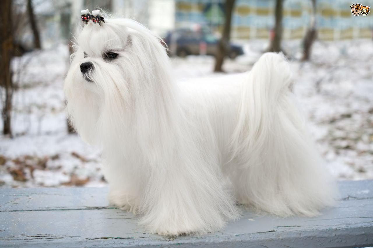 Esistono Cani Che Non Perdono Il Pelo