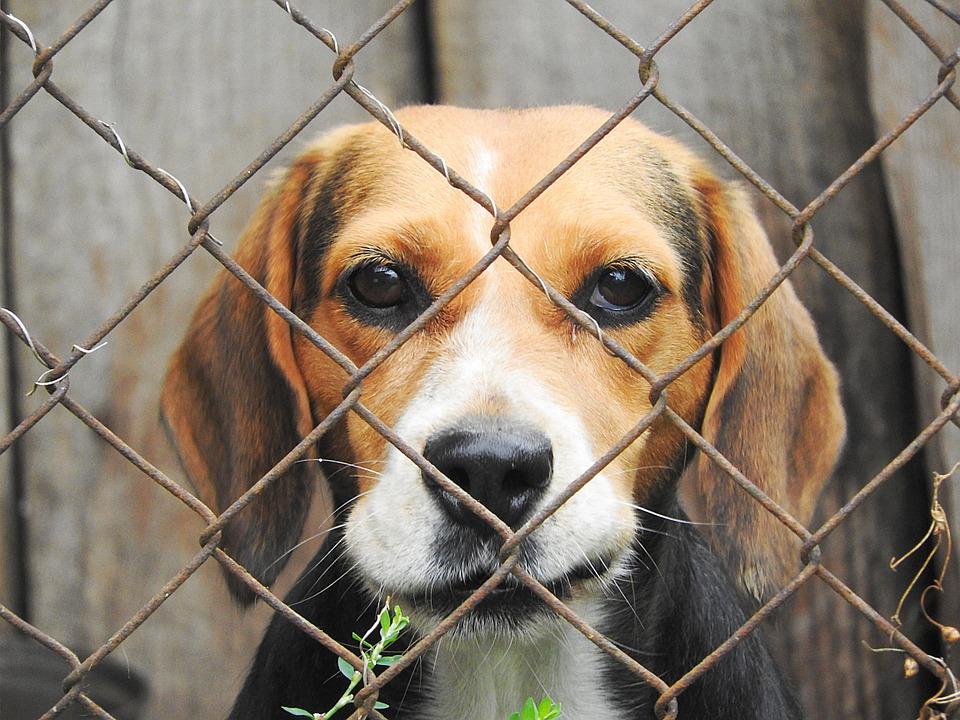 Petizione per dire STOP alla ricerca sugli animali