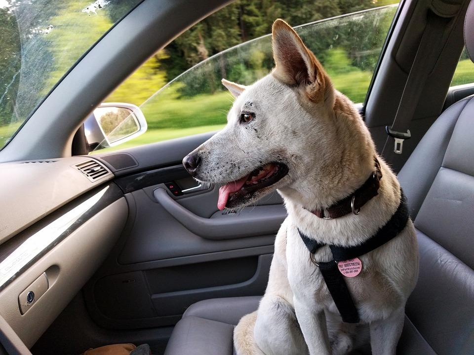 In auto con cani e gatti: norme e consigli utili