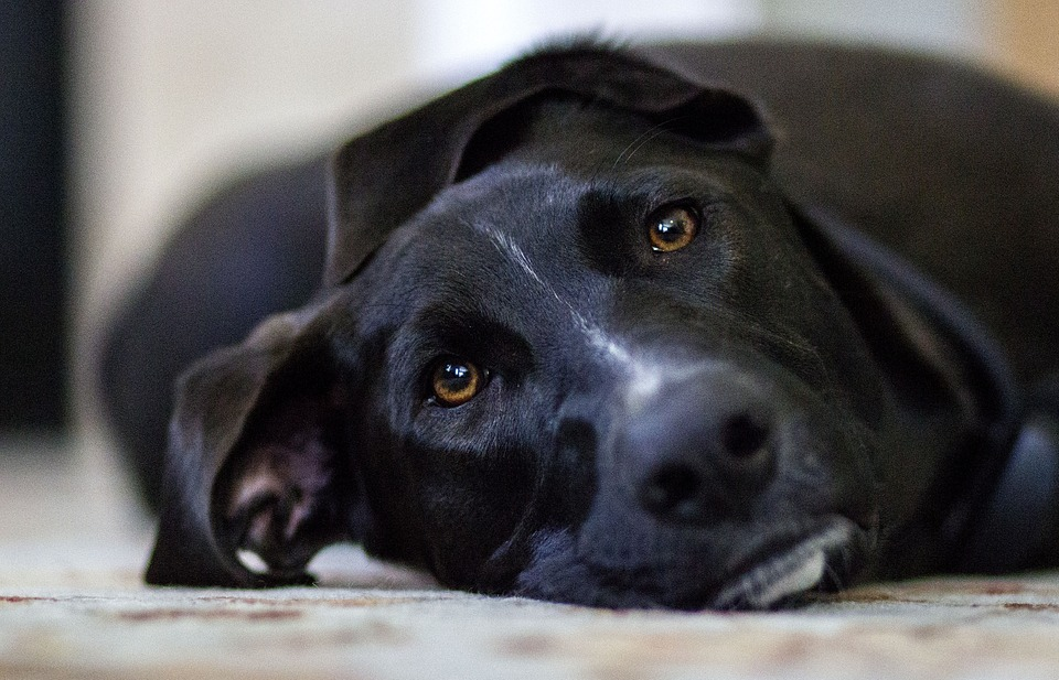 Consigli per allungare la vita al tuo cane