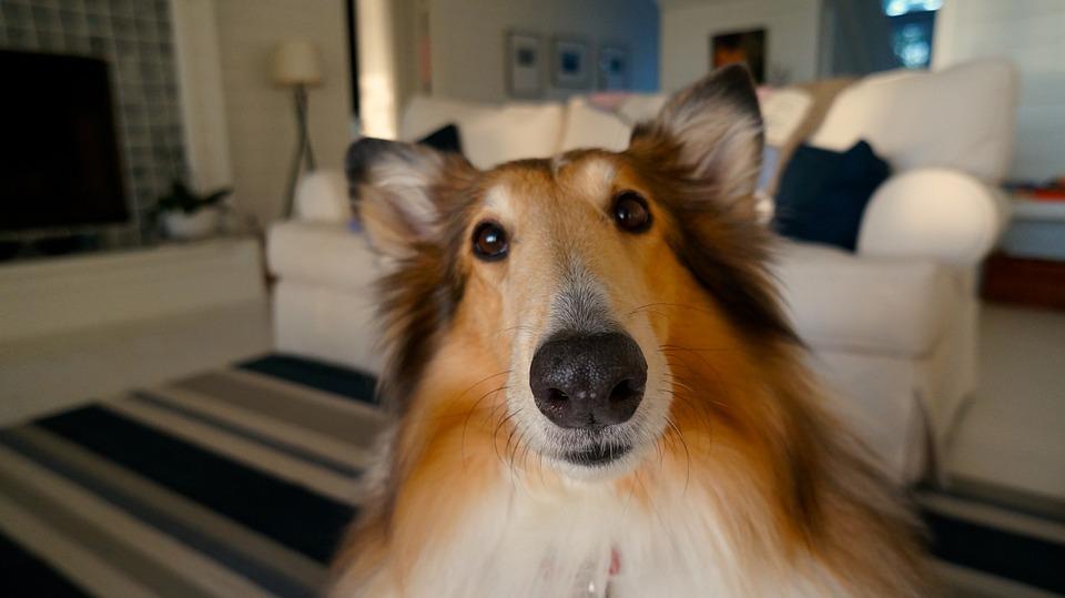 Conoscere il mondo del cane: come interagire