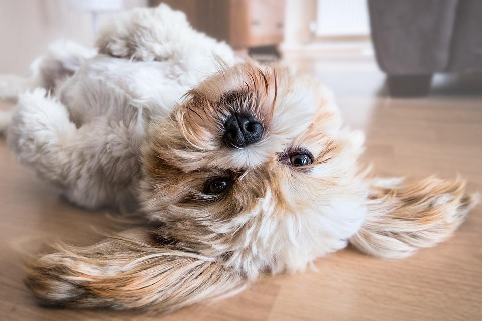 Come alleviare i sintomi dell'allergia a cani e gatti