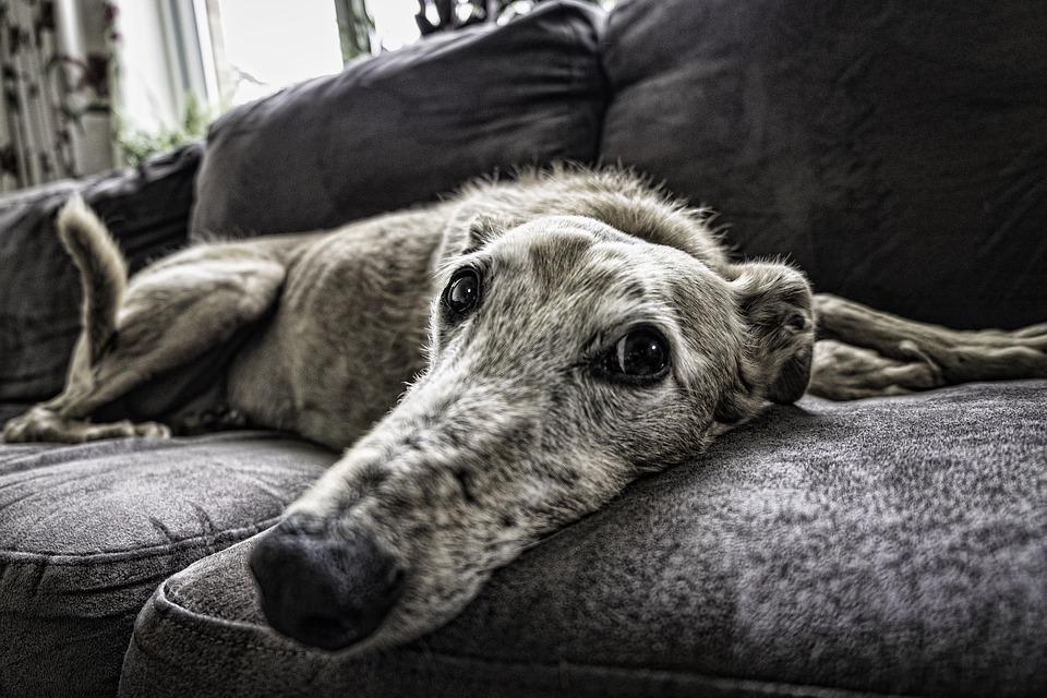 Come aiutare il cane ad affrontare il trasloco?
