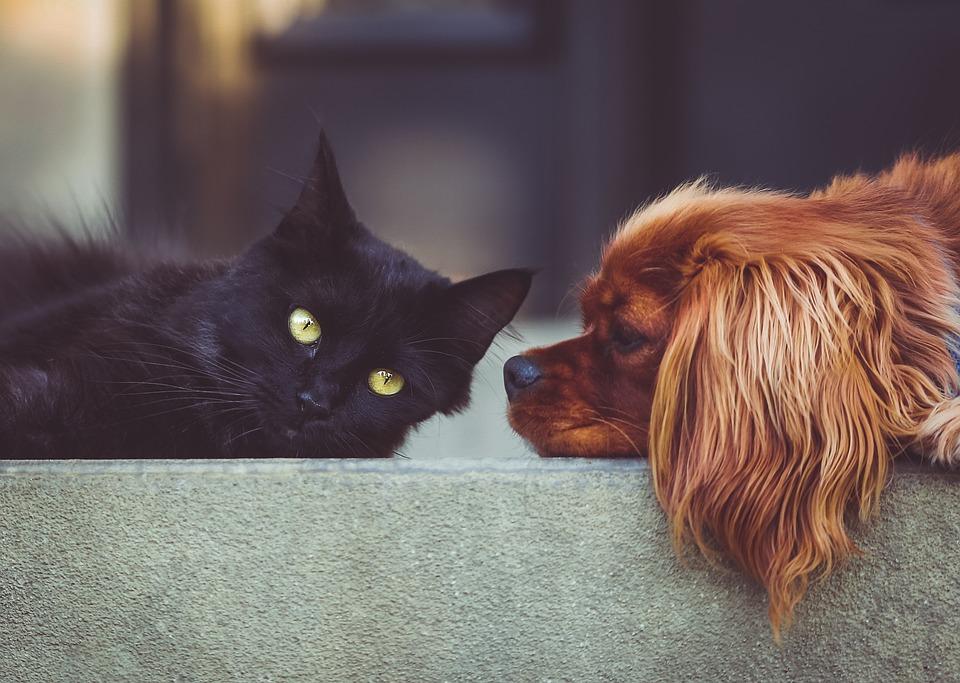 In Italia vengono abbandonati cani e gatti ogni 3 minuti