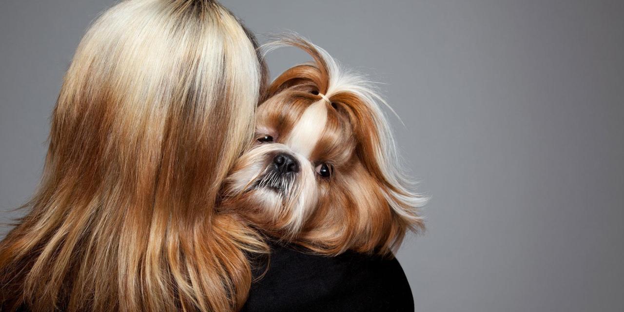Dimmi che cane hai e ti dirò chi sei!
