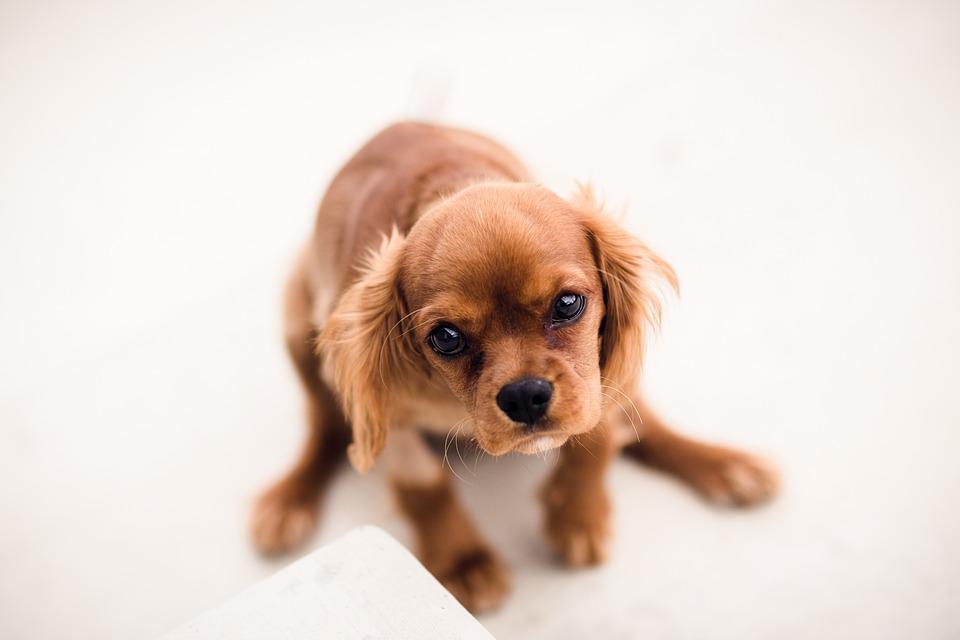 Aiuto! Il mio cane perde il pelo!