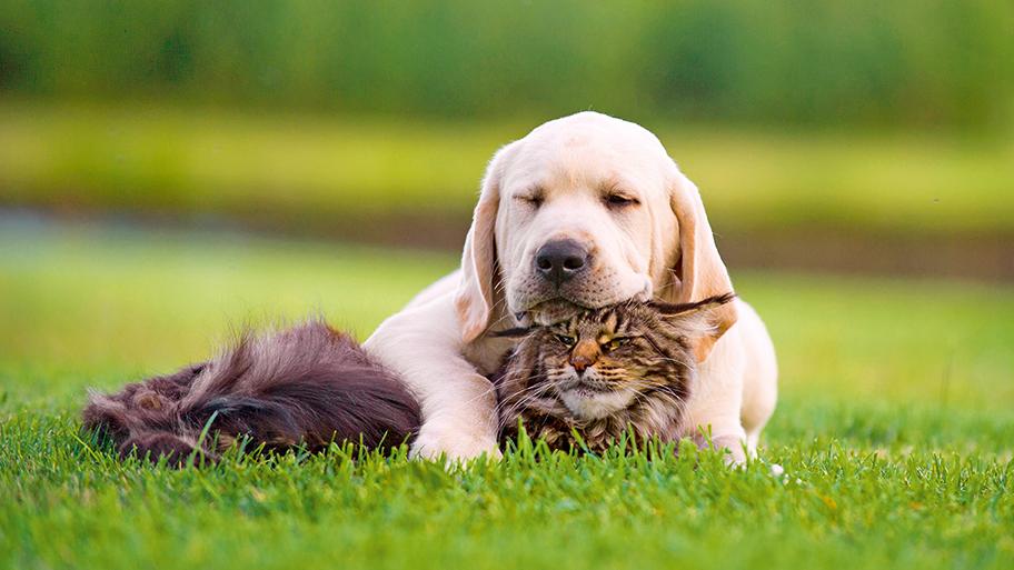 Cani e gatti a confronto: quali sono i loro punti di forza?