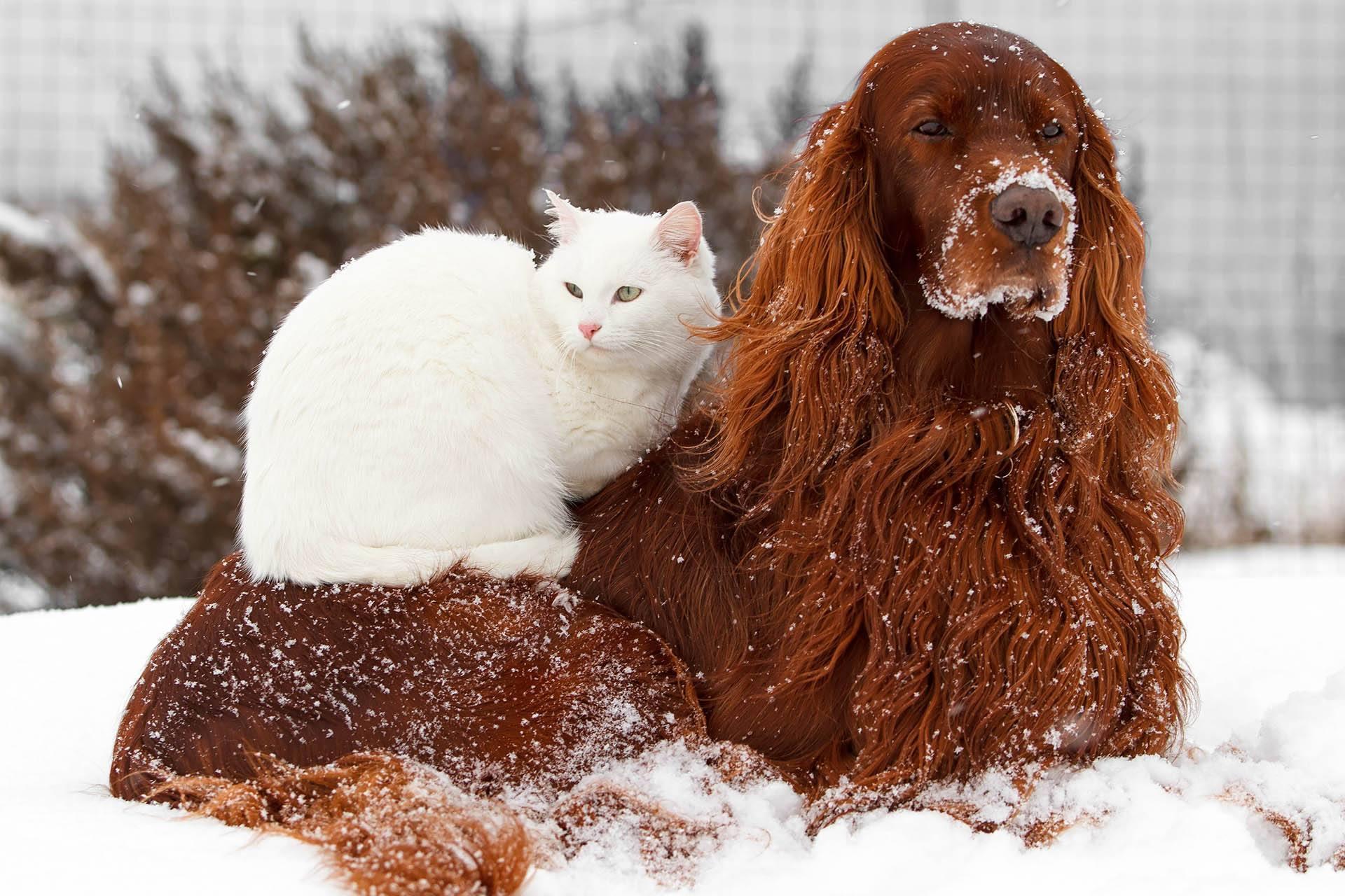 Come proteggere cani e gatti in inverno