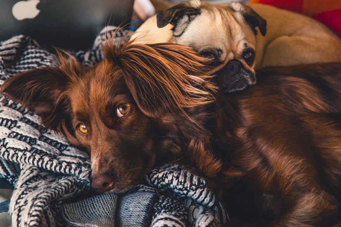 Lo stress influisce sul sonno dei cani